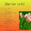 Navroz-bahor-haqida-sherlar-rasmlarda-tabriklar